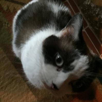 Notre chat Florus